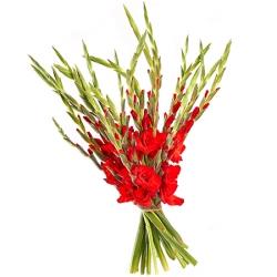 4-daagse gladiolen boeket