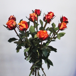 Roos 'Granada'