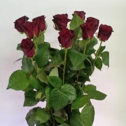 Roos 'Aanbieding'