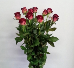 Roos 'Ruby red'
