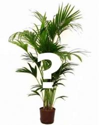 Snel plant bestellen